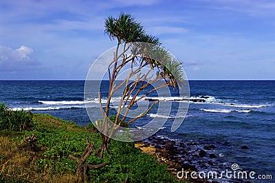 Shoreline Oahu Hawaii