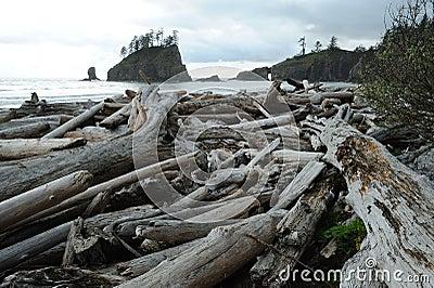 Shoreline of pacific coast