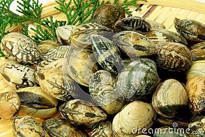 Short-necked clam