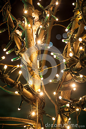 Shot of tree decorated with lights at night