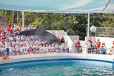 Show at the dolphinarium Editorial Stock Photo