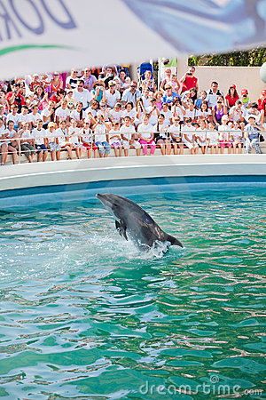 Show at the dolphinarium Editorial Photo