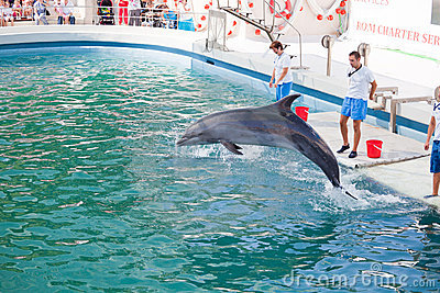 Show at the dolphinarium Editorial Stock Image