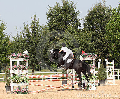 Show jumping Editorial Photography
