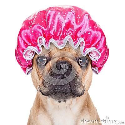 Shower Dog Stock Photo Image 48515480