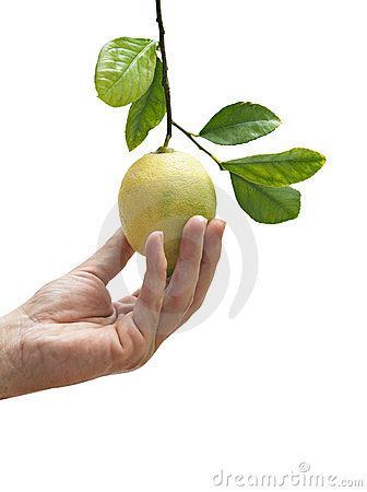Showing lemon on twig
