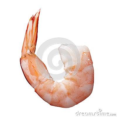 Free Shrimp Royalty Free Stock Photos - 10737768
