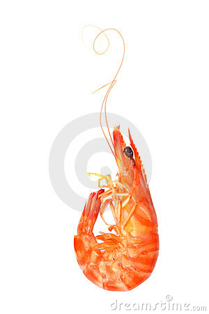 Free Shrimp Royalty Free Stock Photography - 11357647