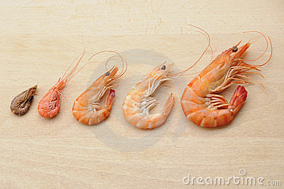 Shrimp composition