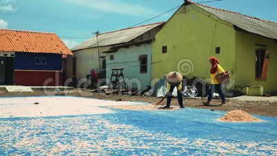 Shrimp drying on ground in Cilacap, Java, Indonesia. Indonesian woman spreading it with broom on sunny summer day stock footage