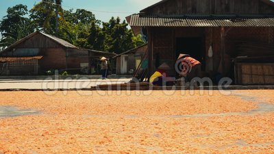Shrimp drying on ground in Cilacap, Java, Indonesia. Indonesian women spreading and sorting it stock video footage