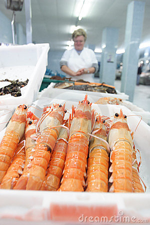 Shrimp in the fish market Editorial Stock Photo