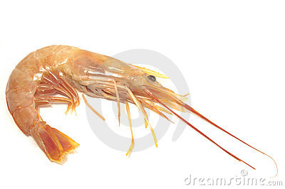 Shrimp on white