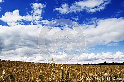 Shropshire Blue Sky