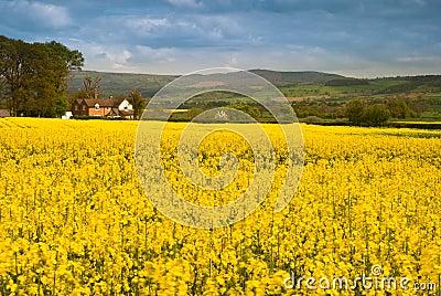Shropshire Farmland