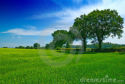 Shropshire Summertime