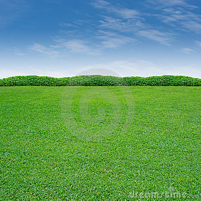 Free Shrub And Grass Royalty Free Stock Photos - 20519598