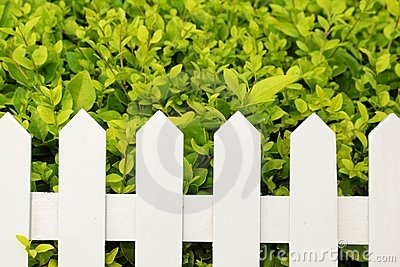 Shrub and fence