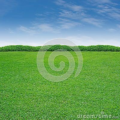 Shrub and grass