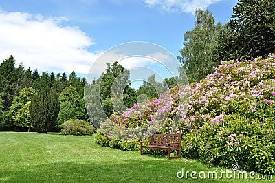 Shrubby garden