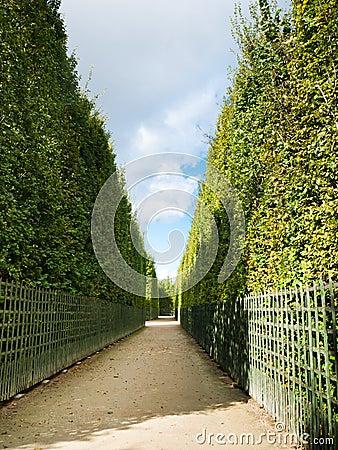 Shrubs corridor