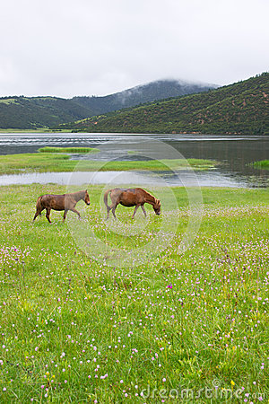 Shudu Lake scenery