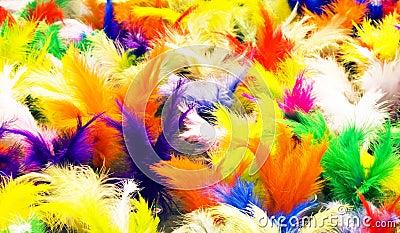 Shuttlecock Feathers