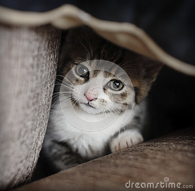 Shy kitten hiding