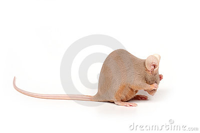 Shy mouse