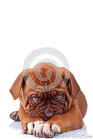 Shy puppy dog