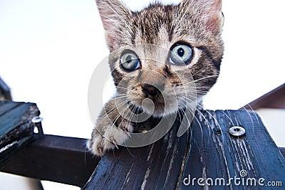 Shy tabby cat