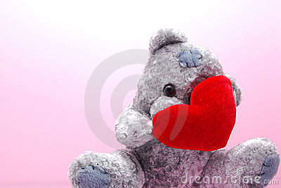 Shy teddy