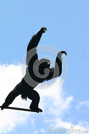 Free Siamang Gibbon Royalty Free Stock Image - 4706746