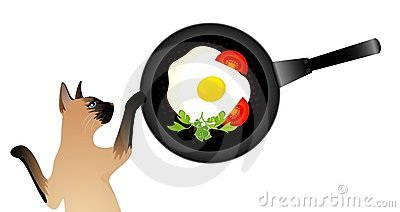 Siamese cat wants to eat the fried eggs