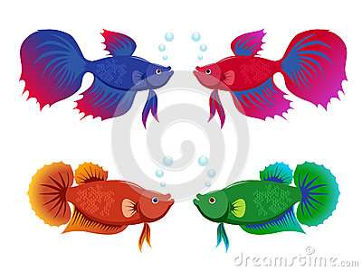 Siamese fighting fishes set