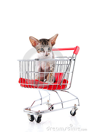 Siamese kitten in shopping cart