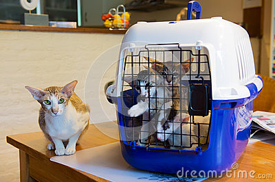 Siamese mother cat with kitten in cage
