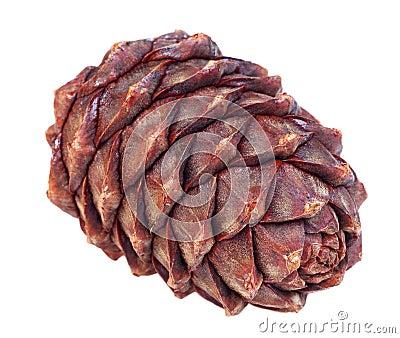 Siberian pine cone