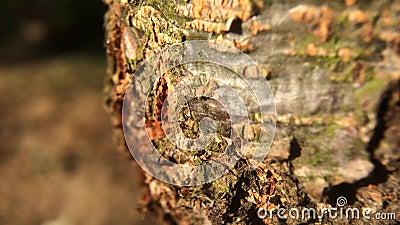 Sich schnell bewegende Ameisen auf Baum stock video footage