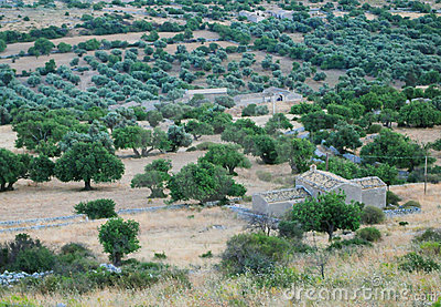 Sicilian rural landscape