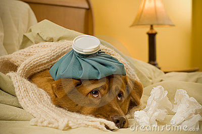 Sick As A Dog Stock Photo - Image: 3725690