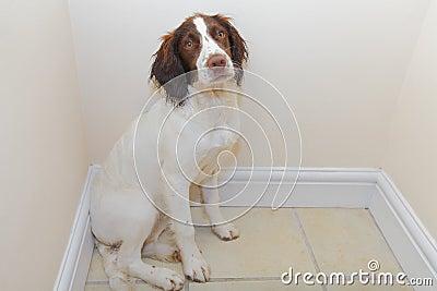 Sick / guilty dog