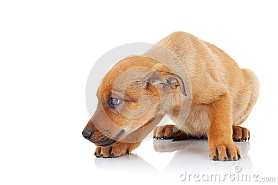 Side view of a brown stray puppy dog