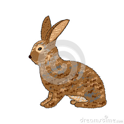 A sideview of a rabbit on a white background