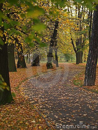Sidewalk in autumn park