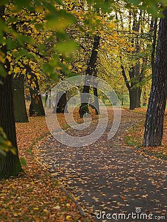 Sidewalk in autumn park