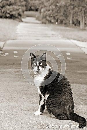 Sidewalk cat