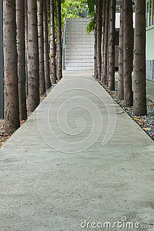 Free Sidewalk Center Tree Royalty Free Stock Photos - 14313618