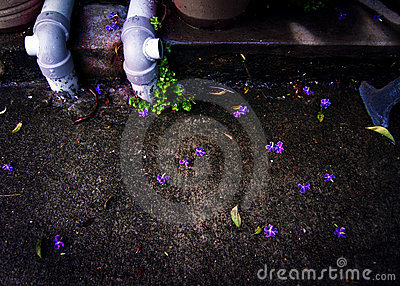Sidewalk and fallen purple flower petals