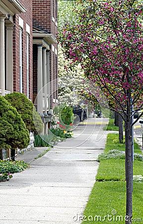 Sidewalk with Flowering Trees
